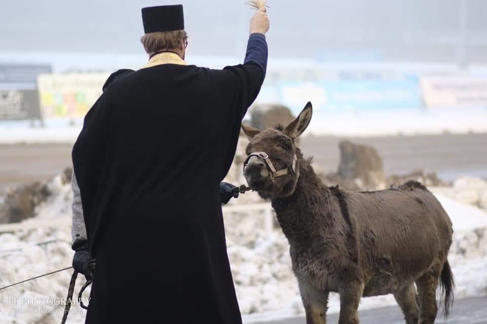 Ossi Teivossa eläinten joulurauhanjulistuksessa, hänet siunattiin! (Ossi on ollut nyt jatkuvasti loimi päällä, siksi karva näyttää aivan hirveältä...)